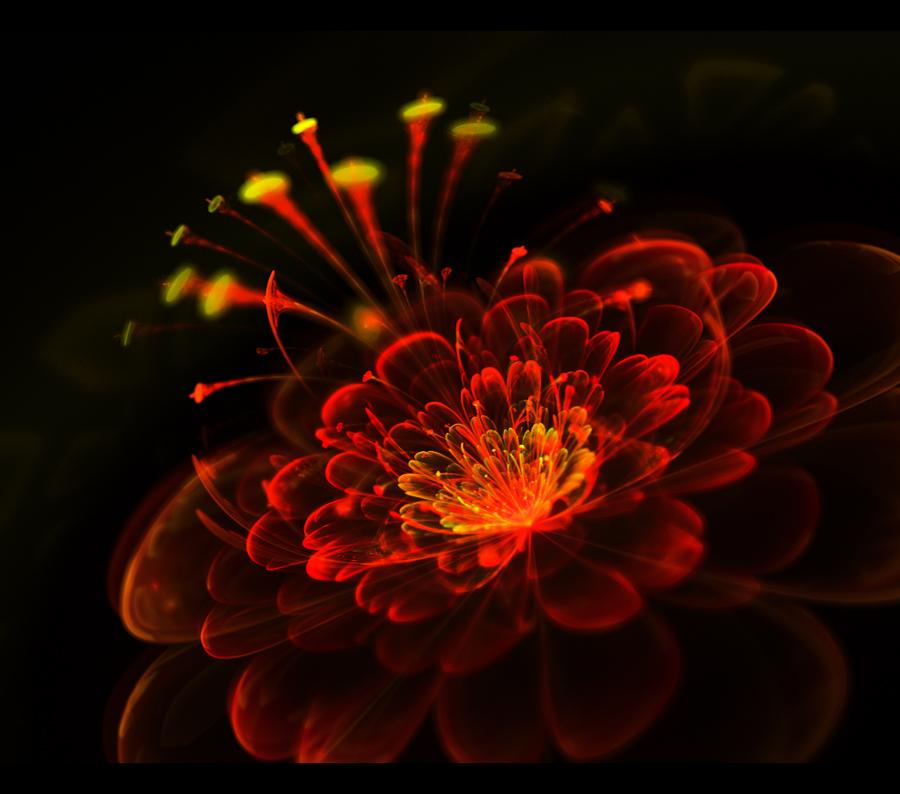 magic xmas flower... by FeliFee