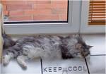 keep cool... by FeliFee
