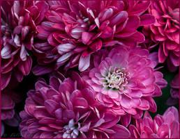 pink ...try by FeliFee