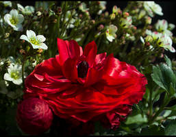 Snow White and Rose Red... by FeliFee