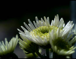 White Sensation... by FeliFee