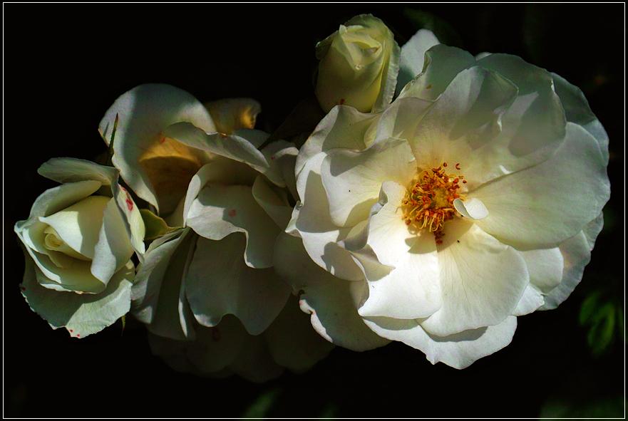 White Romance... by FeliFee
