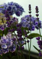 Blue Harmony... by FeliFee