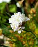 Bouquet de Fleurs...