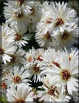 White Autumn...