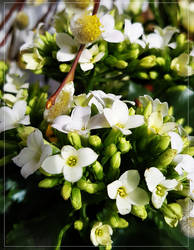 White Spring... by FeliFee