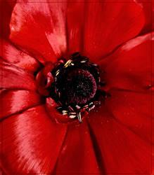 Deep Red Mid... by FeliFee