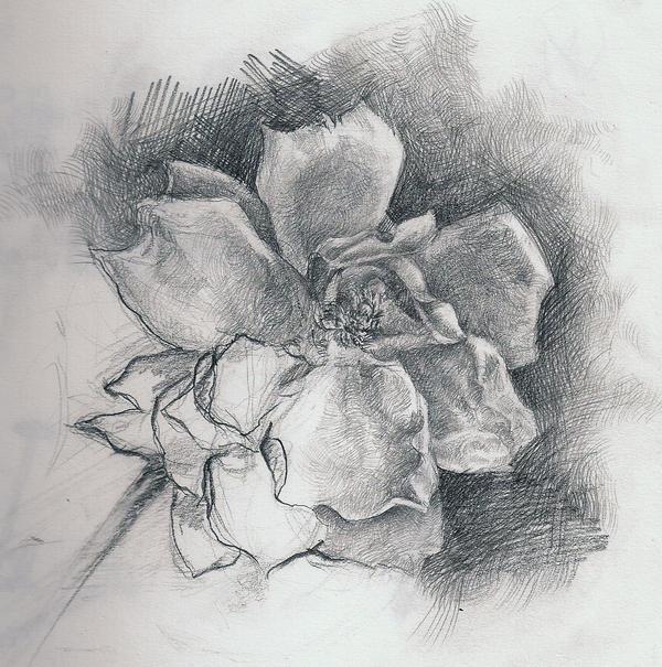 the flower drawing by TruskawkowaJa