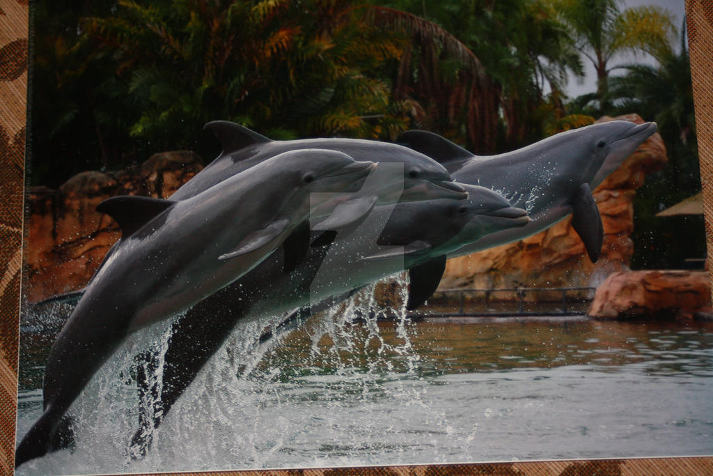 SANDOLLAR : Dolphin Group Shot by SeleneTheWerewolf