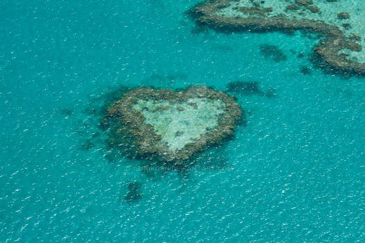 Heart of the Great Barrier Reef