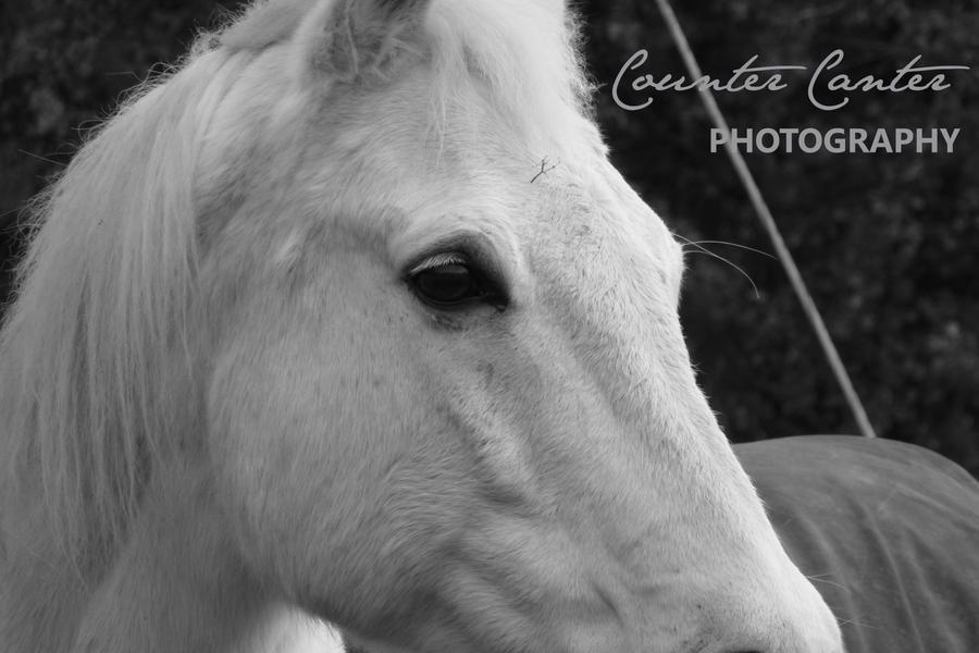 CounterCanterPhotos's Profile Picture