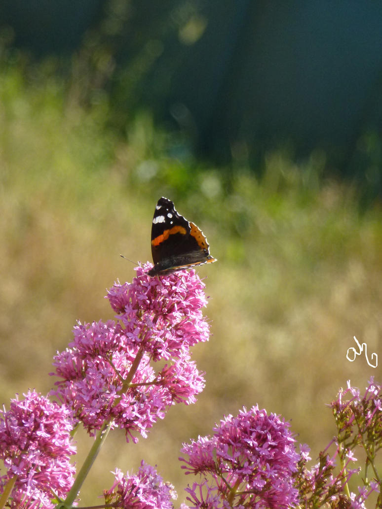 Little Butterfly by CounterCanterPhotos