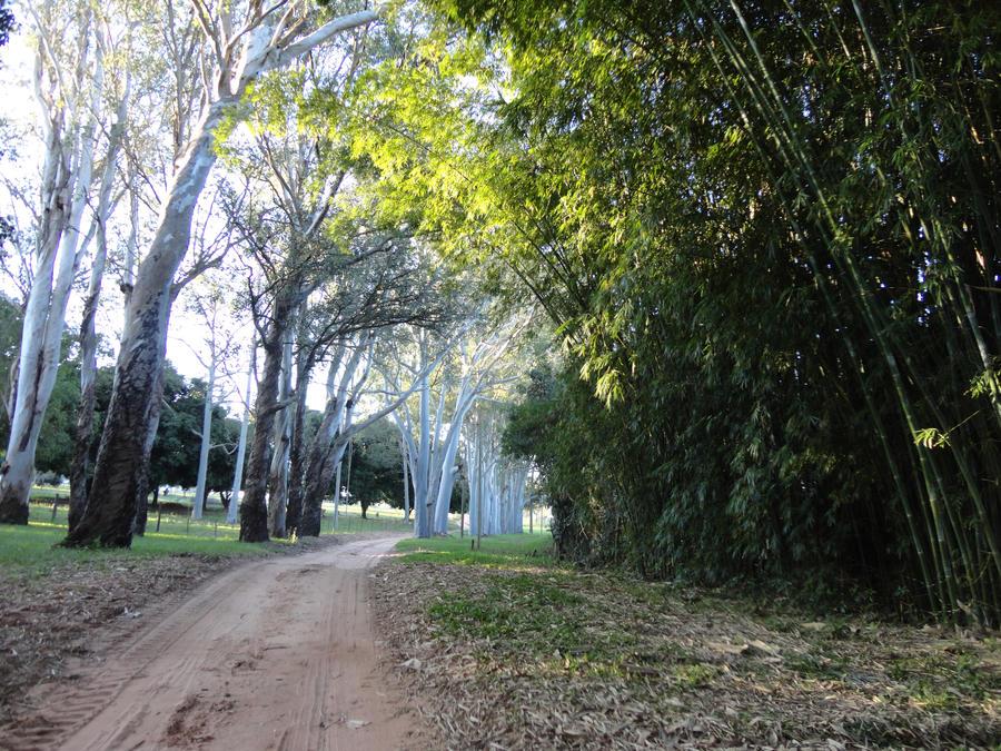 White_Eucalyptus by BLuisi