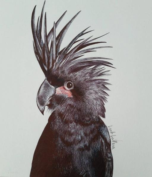 Ballpoint Pen Bird by leahlapera