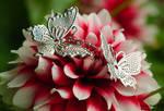 28 December 2013 - Butterflies