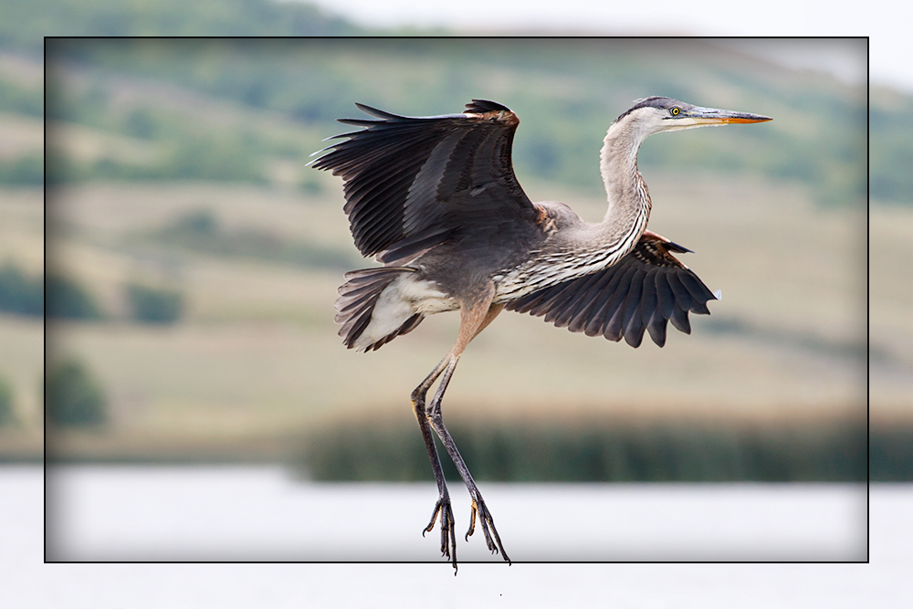 Ballet du Heron by Behrfeet