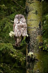 My Day with an Owl