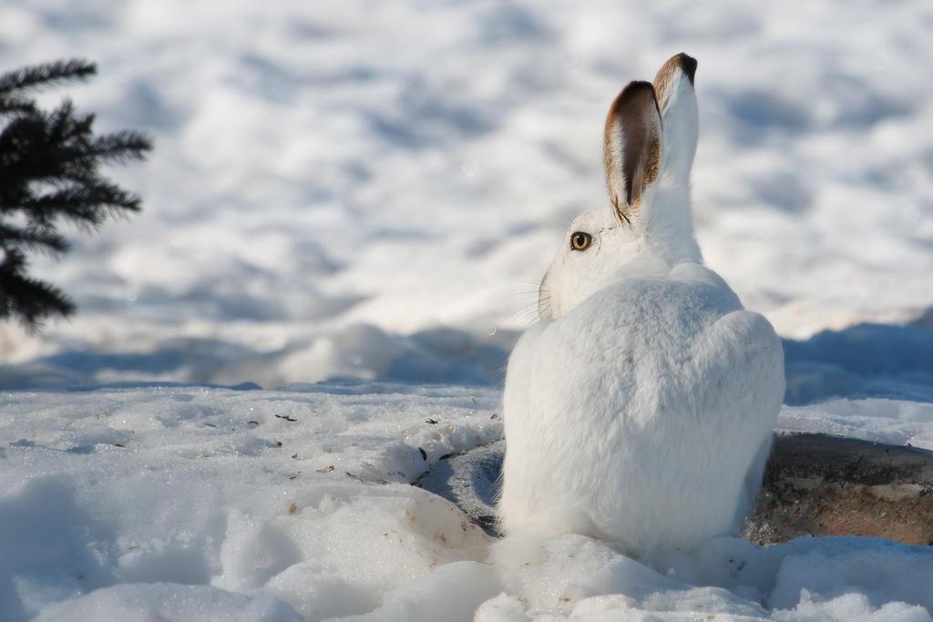 Jack the Rabbit by Behrfeet