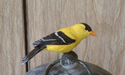 Yellow Finch - Side View by Batalha-Enterprises
