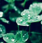 diamond drops by bailey--elizabeth