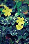 springtime by bailey--elizabeth