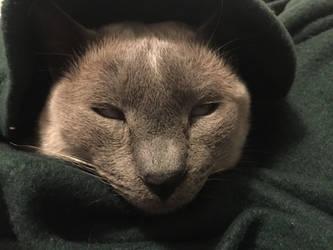 Jake the cat 2 by BordlineInsane