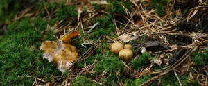 Forest - mushrooms