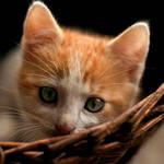 Kitten_02