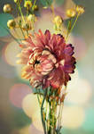Dried flowers_07 by rejmann