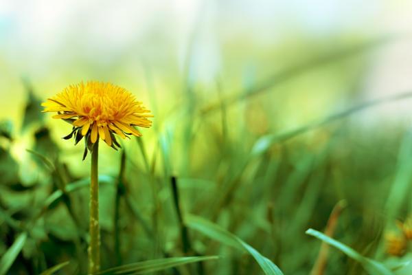 Spring by rejmann