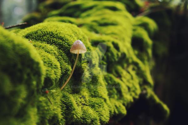 Mushroom In Green Forest (Mycena erubescens) by rejmann