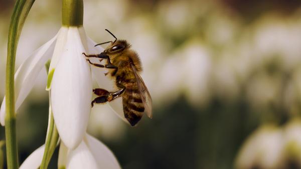 Bee by rejmann