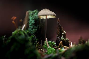 Glowing Mushroom