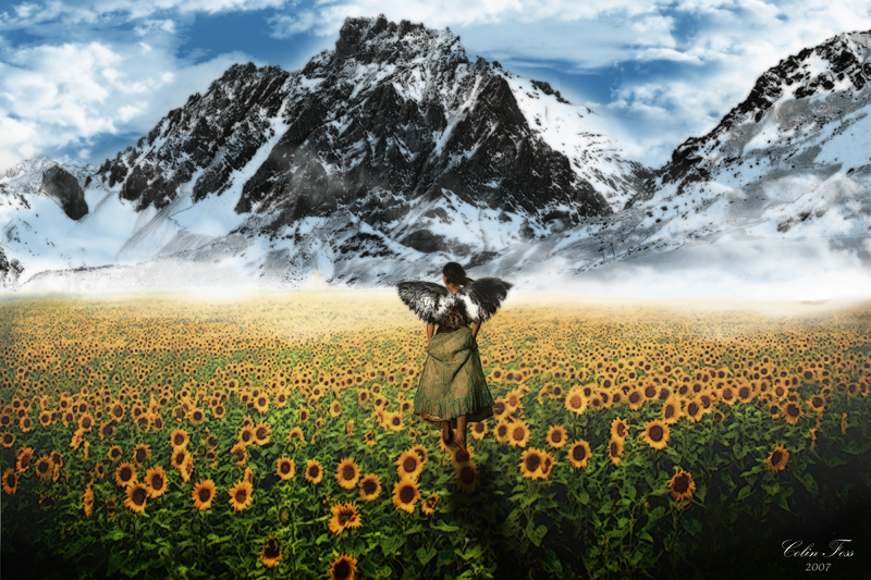 Sunflower Walk by Alegion