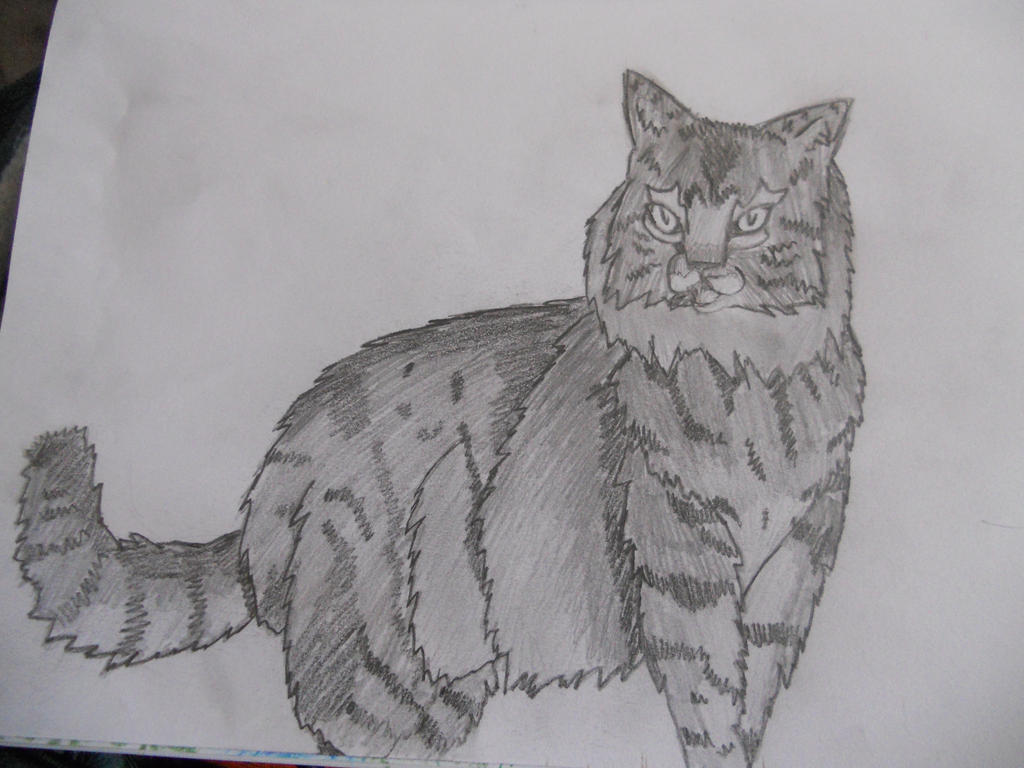 Rough Sketch- Graystripe by Genbear