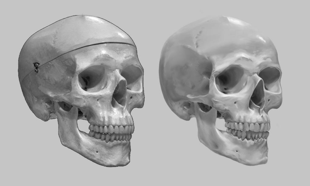 Skull Practice by nikillaby