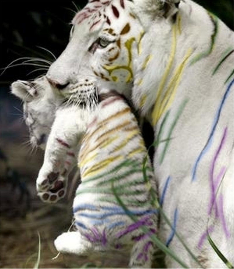 an analysis of white tigers Here are a few questions for study and discussion  the monkey's paw is a famous short story about a cursed talisman  it tells the story of the white.