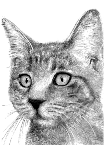 Cat pencil drawing by portraitartuk