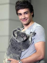 Liam plus Koala equals Adorableness by Katnissgirl12