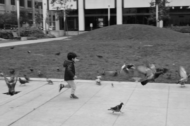 Pigeons of Perk Plaza by waitingforlefty