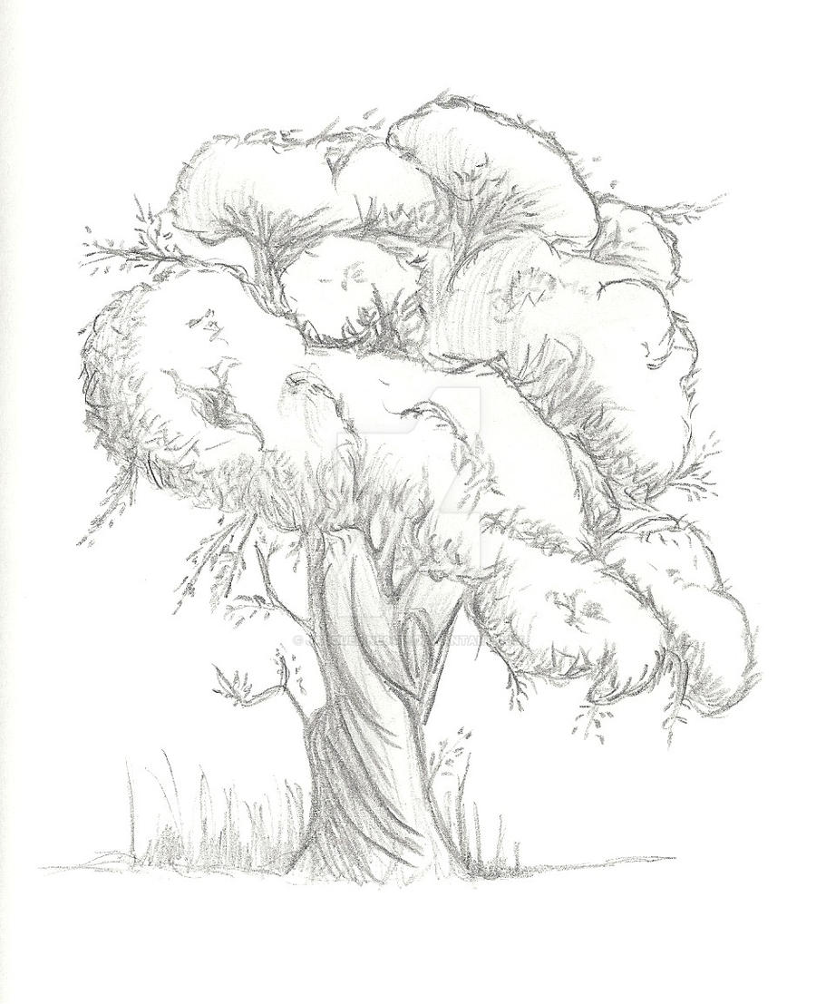 pencil drawing tree by jacqueline9481 on deviantart