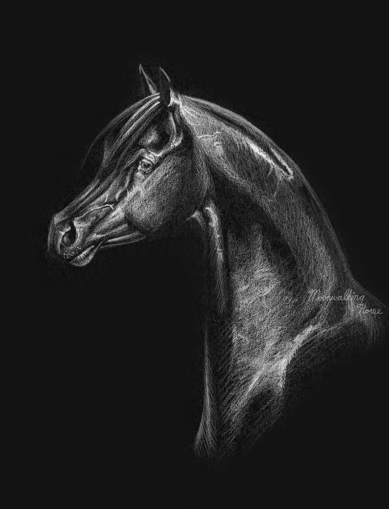Classy Arabian by MoonwalkingHorse