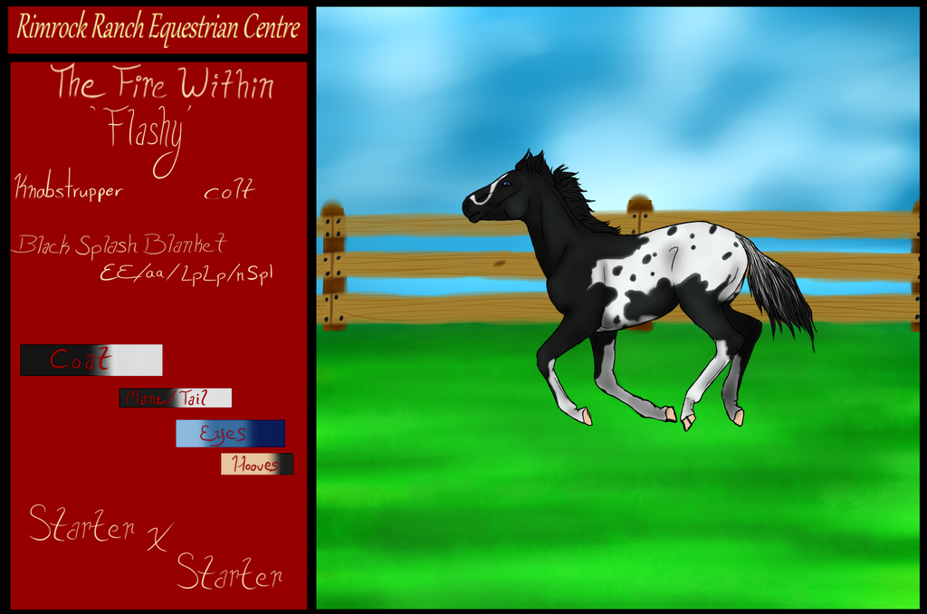 RR The Fire Within TBD - weanling by RimrockRanchEC