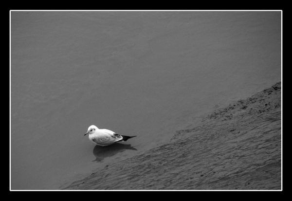 a bird by jasonshawcross