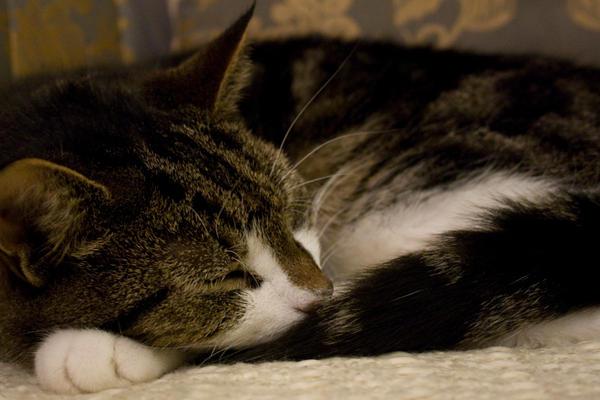 cat - 02 by jasonshawcross
