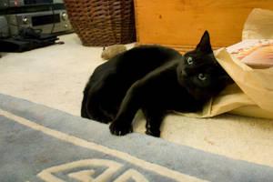 cat - 05 by jasonshawcross