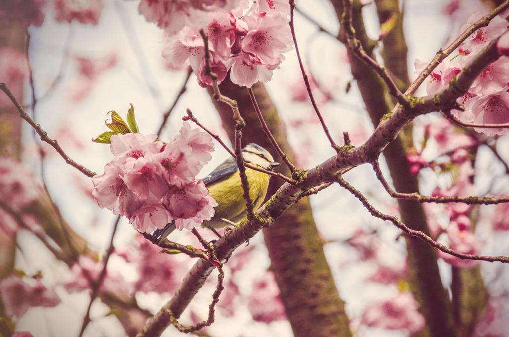 Spring colors by Dahlia-Aubrey