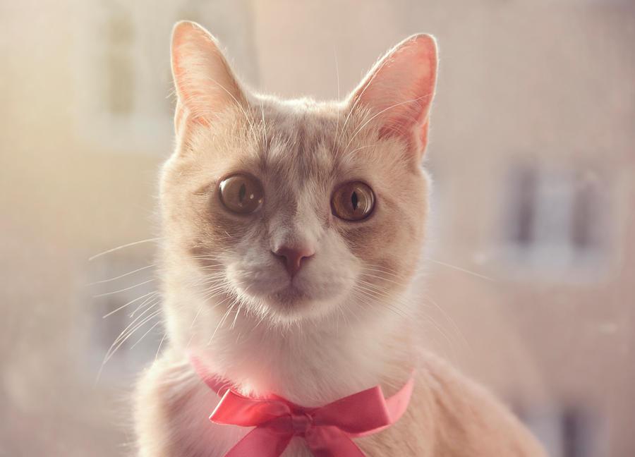 The lovely cat by Dahlia-Aubrey