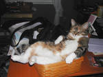 my lazy cat XD