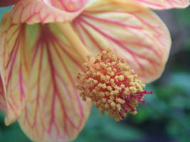 Flower 01 by snapboy